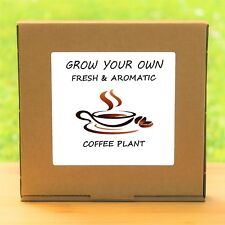 Grow Your Own Coffee Plant Kit - Indoor Windowsill Gardening Gift Set