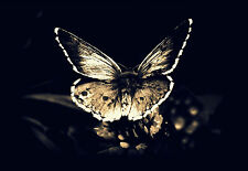 Framed Print - Gothic Death Moth (Picture Poster Animal Insect Butterfly Art)