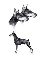 DOBERMAN PINSCHER DOG STUDIES LOVELY GREETINGS NOTE CARD