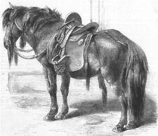 HORSES. Japanese horse, antique print, 1861