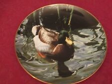 MALLARD DUCK collector plate RON PARKER Waterbirds - Hamilton Collection
