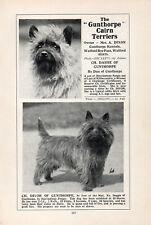 CAIRN TERRIER OLD VINTAGE 1934 NAMED DOG PRINT PAGE GUNTHORPE KENNELS
