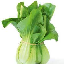 BABY BOK CHOY 100+ seeds green stem EASY TO GROW vegetable garden SLOW BOLTING