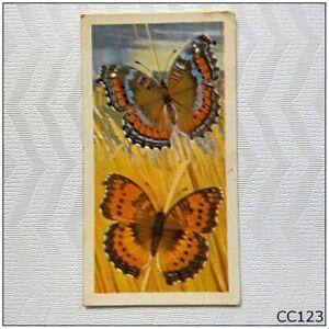 Brooke Bond Butterflies Of The World #5 Precis octavia Tea Card (CC123)