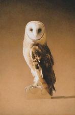 Barbara Banthien Wildlife Print - 'Ghost Bird' Barn Owl
