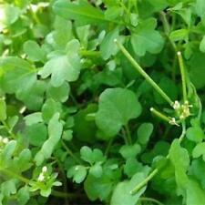 Cress Seeds - True Watercress | Non Gmo | Usa Garden Seeds | Fresh 2021