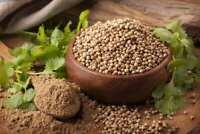Seeds Coriander (Chinese Parsley Dhania) Herbs Planting Organic Heirloom Ukraine