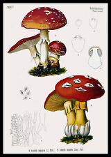 Mushroom Art Print Vintage Forest Mushroom Print/Poster Kitchen Decor