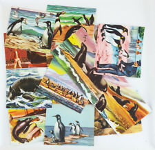 11 Pieces Vintage Sea lion & Penuine Image Paper Ephemera For Journaling Scrap B