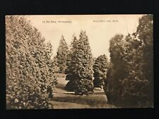 Postcard In the Glen, Whiteabbey Co. Antrim  Unposted, Photo 2947 Coon - PCBOX1