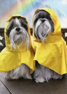 Anniversary Greeting Card  - Rain Poncho Dogs