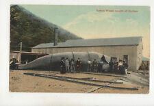 Sperm Whale Caught Off Durban South Africa Vintage Postcard Us046