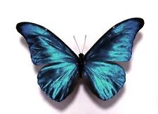 Wedding Table Butterfly Decorations Butterflies 10 Sparkling 3D Teal Blue