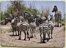 Nice Group of Zebras Full Deck Playing Cards New & Original 52+2 Jokers L@K!*