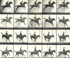 HORSE JUMPING FENCE. The Leap. Suspension, Landing, and Recovery 1912 print