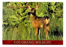 Mule Deer Colorado Wildlife Postcard Young Meadow Unposted