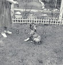 Vintage Real Photo- Animal- Dog- Bulldog- Plays Sit- Garden- Woman- 1950s