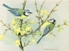 Blue Tit Vintage Bird Print by Basil Ede #19