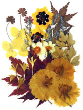 Pressed flowers garden tickseed pansy cosmos multicule cornflower maple foliage