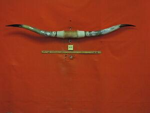 MOUNTED STEER Horns 6 FT 5  MOUNTED BULL HORNS  TEXAS LONGHORN #3829