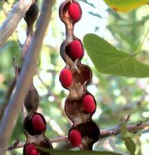Mescal bean Texas Mountain Laurel exotic Sophora secundiflora rare seed 50 seeds