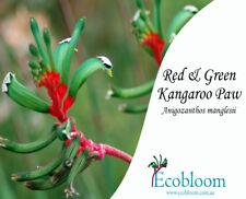 Red & Green Kangaroo Paw (Anigozanthos manglesii) Seed Packet