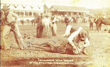 CT57. Postcard. Calgary Stampede.Alta 1912. Rodeo.Conquering Wild Horses.Cowboys