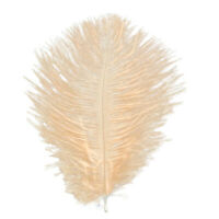 Fifty 50 yellow ostrich blondene feather first A grade 350-400MM