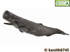 CollectA SPERM WHALE solid plastic toy wild sea marine ocean animal NEW 💥