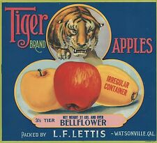 "RARE OLD ORIGINAL 1920 TIGER LITHO ""TIGER BRAND"" LABEL WATSONVILLE CALIFORNIA"