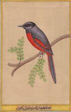 Long Tail Bird Art Handmade Watercolour Indian Tropical Nature Ethnic Painting