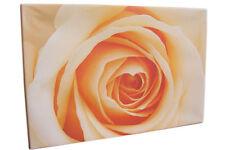 Leinwandbild Küche Wohnzimmer 60x40cm Rose Rosenblüte Blume Natur Keilrahmen