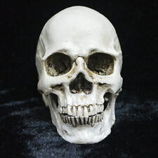 1Pc Resin Replica Human Anatomy Skull Real Halloween Horror Decor Gift US Stock