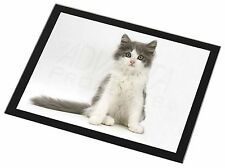 Cute Grey and White Kitten Black Rim Glass Placemat Animal Table Gift, AC-183GP