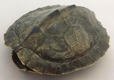 Real Turtle Shell - 4 - 5 inch Long - Map Turtle - Carapace Taxidermy
