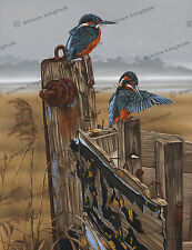 Kingfisher 'Lakeside Companion' by Steven Lingham Ltd Ed Giclee Wildlife Print