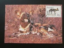 wild dog Lycaon maximum card Transkei 73036