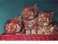 L066.Postcard. Kittens in baskets.