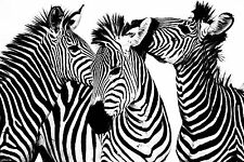 STUNNING ABSTRACT ZEBRA WILDLIFE CANVAS #17 ANIMAL WILDLIFE A1 PICTURE WALL ART