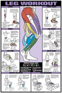 "Leg Workout 24"" x 36"" Laminated Poster - CEF9_B by Fitnus Chart Series"