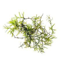 Guppy Grass - NajasGuadelupensis Bunch - Easy Live Aquarium Plants