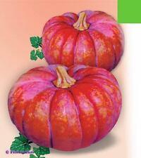 Pumpkin seeds Kavbuz Ukraine Heirloom Seeds
