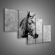LEINWANDBILD BILD POSTER WANDBILD BILDER Tier Tieren Pferd Grau 3FX10146S4B