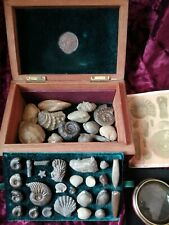 Country House Collection of Jurassic Fossils in Vintage Burr Walnut Box.