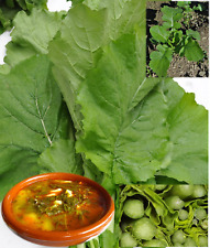 Rape Kale 6,000 Seeds Gourmet Spanish SOW NOW!