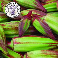 Rare Okra Hill Country Red, Heirloom Vegetable - 20 seeds - UK SELLER