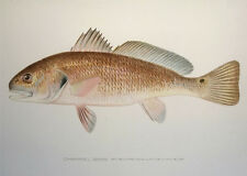 "100% AUTHENTIC 19th Century SHERMAN F DENTON ""CHANNEL BASS"" CHROMOLITHOGRAPH NR"