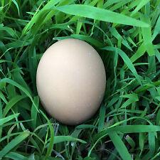 Cornish Cross Slow Grow Chicken Fertile Hatching Egg/s - Buy 1 or more...