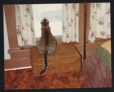 Vintage Photograph Cat From Behind Sitting on Chair Looking Out Window