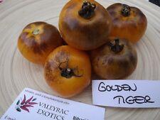 Tomate Golden Tiger - 5+ Samen - Saatgut - WUNDERSCHÖNE BESONDERHEIT!